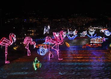 ¡Llegó diciembre! Vive y descubre la Navidad en Medellín a través de estas experiencias